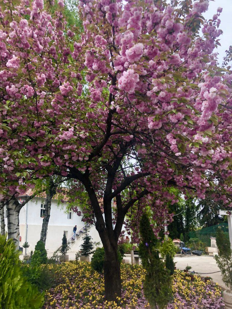 Beautiful flower tree